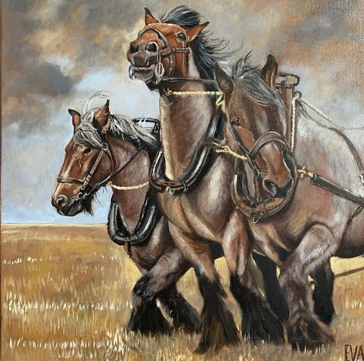 Belgische trekpaarden